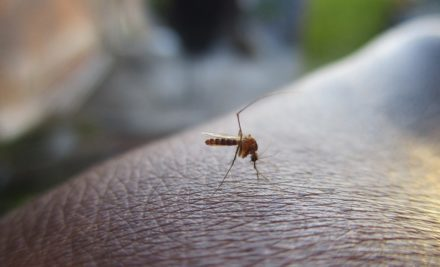 Remèdes de saison: l'été et les moustiques