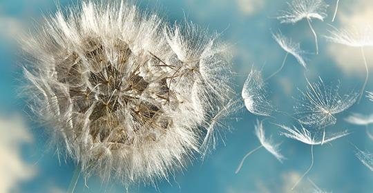 La saison des allergies est à nos portes